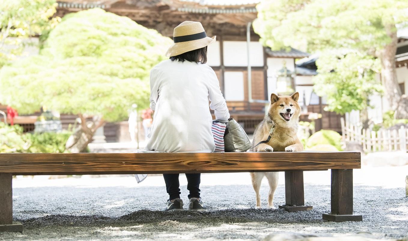 犬にまつわる神社